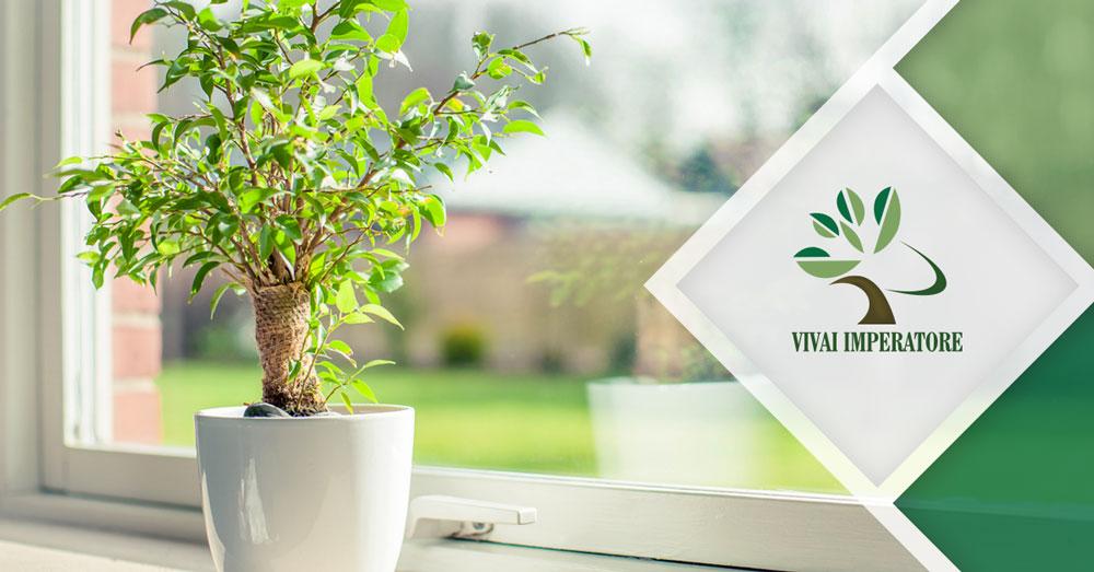 Consigli piante d'appartamento