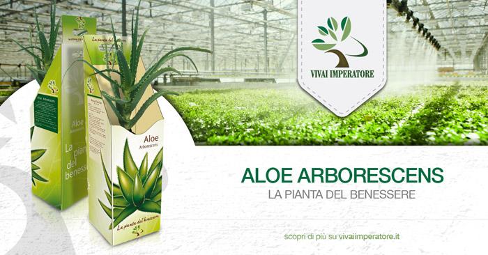 Aloe Arborescens Vivai Imperatore